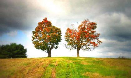 O Homem e as Duas Árvores – O Homem Neutro entre as Duas Árvores